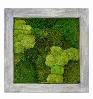 Mos schilderij Raw grey 30% bol en 70% platmos 70 cm