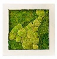 Mos schilderij Natural 50% bol en 50% platmos 70 cm