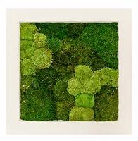 Mos schilderij Natural 30% bol en 70% platmos 70 cm