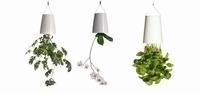 Sky planter- planten op zijn kop