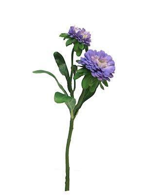 Bloem Beckwith lila