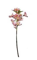 Bloem Blondel roze