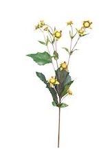 Bloem Heliopsis groen