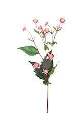 Bloem Heliopsis roze