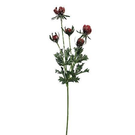 Bloem Helleborus rood