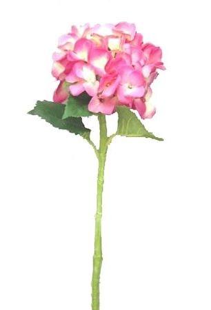 Bloem Hydes roze