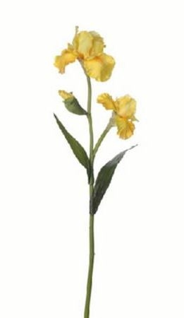 Bloem Iredell geel
