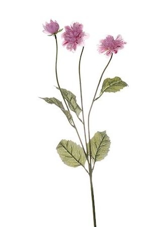 Bloem Sylvia roze