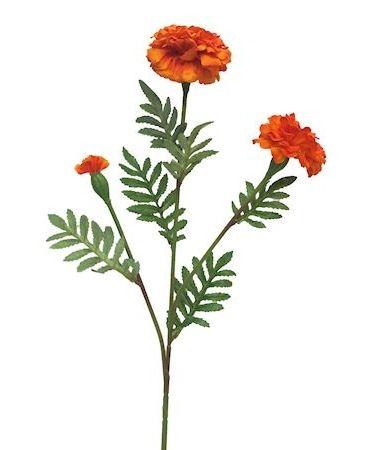 Bloem Tagetes oranje