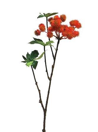 Bloem Thorn oranje