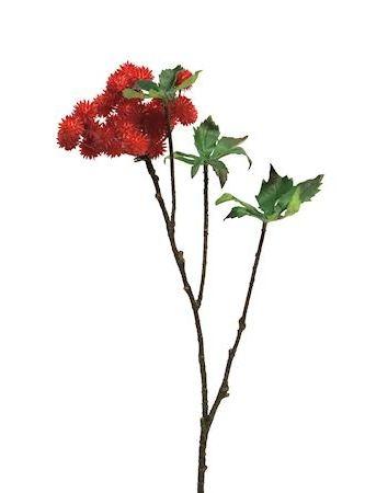 Bloem Thorn rood