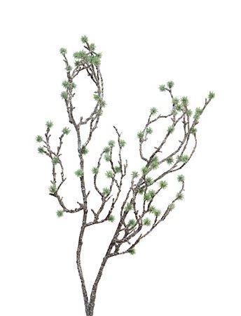 Groentak Mossy groen