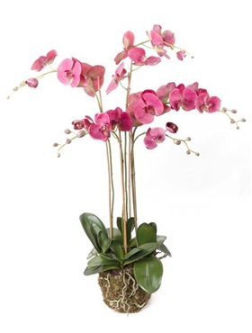 Kunstplant Phalaenopsis with moss beauty