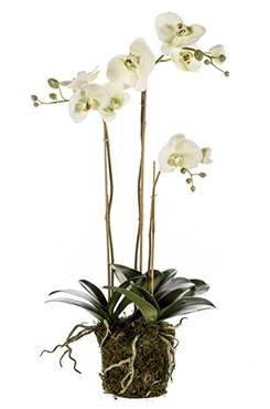 Kunstplant Phalaenopsis with moss light green