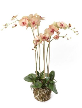 Kunstplant Phalaenopsis with moss old pink