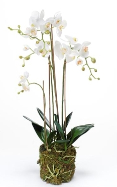 Kunstplant Phalaenopsis with moss white L