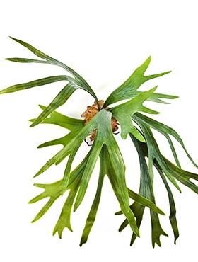 Kunstplant Staghorn fern